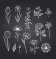 hand drawn flowers set on black chalkboard vector image