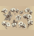 hand drawn set of cotton branches vector image vector image