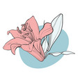 lilly bloom in pastel colors in sketch style vector image vector image