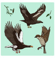 birds fly in the air sparrow and feather eagle vector image