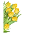 Bouquet of tulips flowers EPS 10 vector image