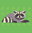 cute raccoon sleeping of a vector image vector image