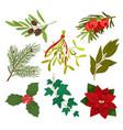 festive seasonal holiday plants for christmas vector image