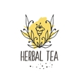 Herbal tea seamless pattern vector image