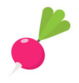 radish flat icon vegetable and diet vector image vector image