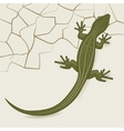 The background of the desert lizard vector image vector image