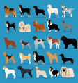 big set of dogs vector image vector image
