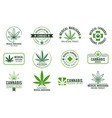 cannabis label medical marijuana therapy legal vector image vector image