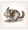 Chinchilla dog sketch vector image vector image
