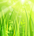 Nature Background with Grass vector image