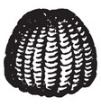 owl moth vintage vector image vector image