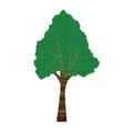 textured bark tree vector image vector image