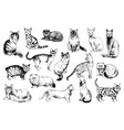 16 hand drawn cat breeds vector image vector image