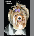 colorful biewer terrier image vector image vector image