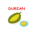 fresh durian fruit isolated on white design vector image