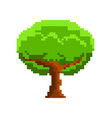 isolated pixel tree videogame vector image