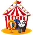A panda beside the fireball vector image vector image