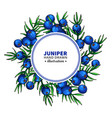 juniper drawing frame isolated template vector image vector image