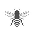 monochrome with bee vector image vector image
