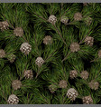 pine branches with cones on dark background vector image vector image