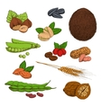 Sketched nuts beans seeds and cereals vector image vector image