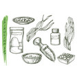 spirulina seaweed sketch icons vector image