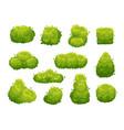 garden bush green vegetation bushes vector image