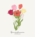 Red yellow and pink tulips bouquet spring