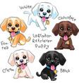 set puppy dog labrador retriever vector image