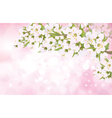 spring blossom trees vector image vector image