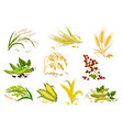 grain and cereals ears isolated icons vector image