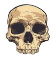 human skull art hand drawn vector image