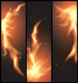 fire flames on a black background vector image