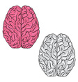 Human brain for medical genetics and healthcare vector image