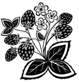 black and white abstract strawberry vector image