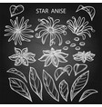 graphic star anise vector image
