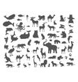 Mammals Birds Fish Reptiles Amphibias Bats Set vector image vector image