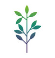 spring branch with green leaves natural vector image vector image