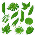 tropical palm leaves set vector image vector image