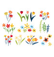 collection wild and garden blooming flowers vector image vector image