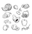 drawing various fruits vector image