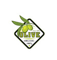 green olive branch icon for food label design vector image vector image
