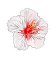 hibiscus white flower tropical plant vector image vector image