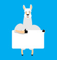 lama alpaca holding banner blank animal and white vector image