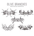 olive branches decorative elements vector image
