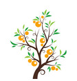 orange tree isolated on white background vector image