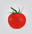 red tomato isolated vegetables vector image