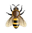bee isolated on white vector image vector image