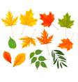 Set of colorful autumn leaves vector image