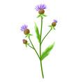 stylized cornflower vector image